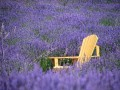 green_acres_lavender_farms_o.jpg